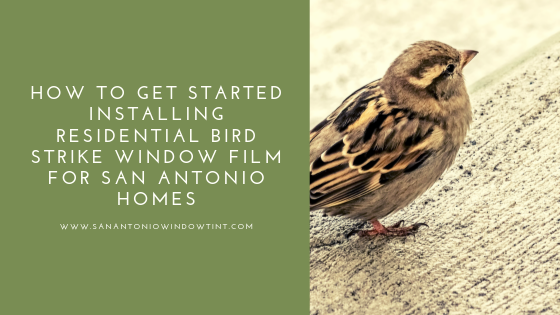 bird strike window film san antonio